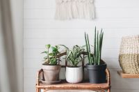 5 x using repurposed furniture as plant stands and support