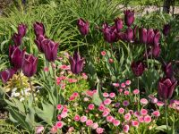 How to use colour in your garden?
