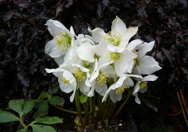 January Hta Plant Of The Moment Create A Winter