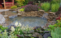 Remove algae and pond weed from water features